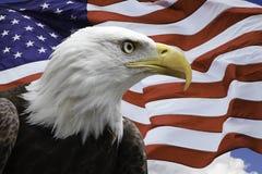 Americano Eagle con la bandiera degli Stati Uniti Immagine Stock