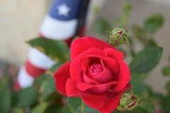 Americano Rose y bandera Foto de archivo libre de regalías