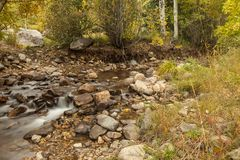 Amerikaans de rivierbed van de Vorkcanion Stock Foto's