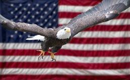 Amerikaanse adelaar met vlag Stock Foto's