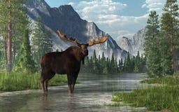 Amerikaanse elanden in een Rivier royalty-vrije illustratie