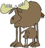 Amerikaanse elanden en kalf Royalty-vrije Stock Foto's
