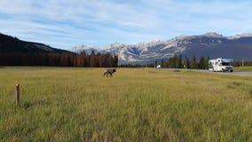 Amerikaanse elanden en rv royalty-vrije stock fotografie