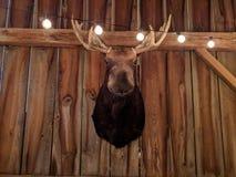 Amerikaanse elanden Hoofdvertoning de Jachttrofee Royalty-vrije Stock Afbeeldingen