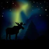 Amerikaanse elanden in Noordelijke Lichten Stock Fotografie