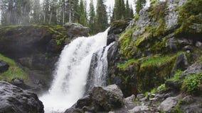 Amerikaanse elandendalingen van het Nationale Park van Yellowstone stock footage