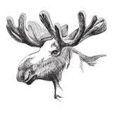 Amerikaanse elandenhoofd in grafische stijl stock afbeelding