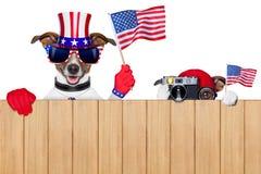 Amerikaanse honden royalty-vrije stock foto's