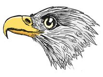 Amerikaanse Kale Adelaar royalty-vrije illustratie