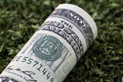 Amerikaanse munt op groen kruiden Royalty-vrije Stock Afbeeldingen
