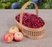 Amerikaanse veenbessen in een mand op een stoffenachtergrond en appelen die daarna liggen Stock Foto