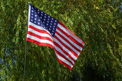 Amerikaanse vlag met boom als achtergrond Royalty-vrije Stock Foto