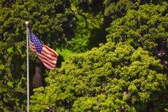 Amerikaanse vlag op de achtergrond van bomen in La, Royalty-vrije Stock Foto