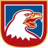 Amerikan skalliga Eagle Head Shield Retro Royaltyfri Foto