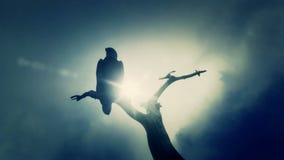 Amerikan skalliga Eagle Seating på ett dött träd i en kall molnig dag royaltyfri illustrationer