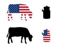 Amerikanen mjölkar kon Arkivbild