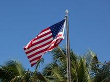 Amerikaner-Stern-u. Streifen-Flagge auf Palmen-Hintergrund Stockbilder