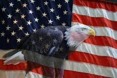 Amerikanische Adler-Markierungsfahne Stockbild