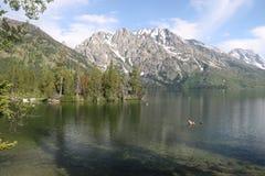 Amerikanische Alpen von Jenny Lake lizenzfreie stockbilder