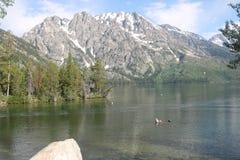 Amerikanische Alpen von Jenny Lake lizenzfreie stockfotos