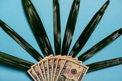 Amerikanische Dollar Bargeld-und Palmblatt Stockfoto
