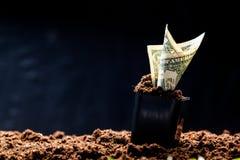 Amerikanische Dollar wachsen Stockfoto
