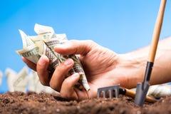 Amerikanische Dollar wachsen vom Boden Stockbilder