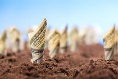 Amerikanische Dollar wachsen vom Boden Stockfoto