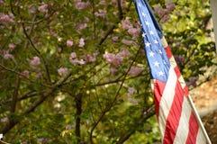 Amerikanische Flagge, die gegen Blumenhintergrund wellenartig bewegt stockbilder