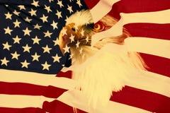 Amerikanische Flagge mit Adler Lizenzfreie Stockfotos