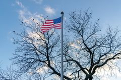 Amerikanische Flagge, Sternenbanner, brennend im Wind, V?gel durch, die in einem blattlosen Baum im Hintergrund, Stadtmitte sitze stockfotografie