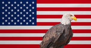 Amerikanische Flagge, Weißkopfseeadler, nationale Sonderzeichen von USA Stockbild