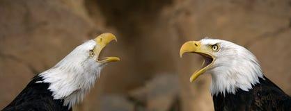 Amerikanische kahle Adler Lizenzfreies Stockbild