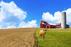 Amerikanische Landschaft stockbilder