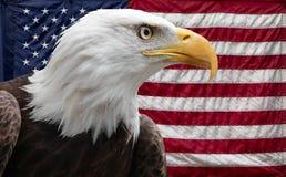 Amerikanischer Adler mit Markierungsfahne Stockbild