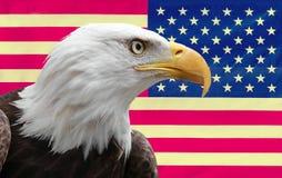 Amerikanischer Adler mit Markierungsfahne Lizenzfreies Stockbild
