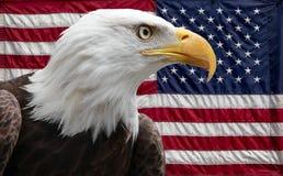 Amerikanischer Adler mit Markierungsfahne Stockfotos