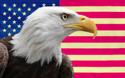 Amerikanischer Adler mit Markierungsfahne Stockfotografie