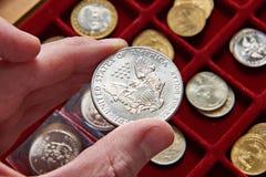 Amerikanischer Dollar in der Hand des Numismatikers Stockbilder