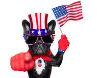 Amerikanischer Hund lizenzfreie stockfotografie