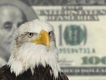 Amerikanischer kahler Adler gegen Dollarhintergrund Lizenzfreies Stockbild