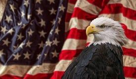 Amerikanischer kahler Adler mit Markierungsfahne Stockfotografie