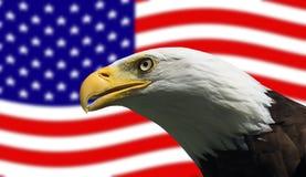 Amerikanischer kahler Adler und Markierungsfahne Stockfoto
