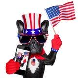 Amerikanischer selfie Hund stockfotos