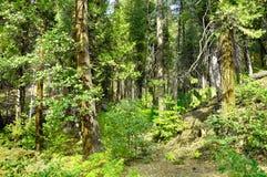 Amerikanischer Wald stockbilder