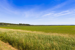 Amerikanisches Ackerland Stockbild