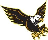 Amerikanisches Flugwesen des kahlen Adlers Stockbild