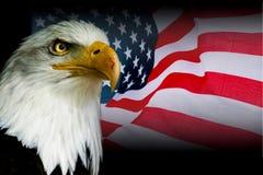 Amerikanisches Symbol - USA-Flagge mit Adler Stockbild