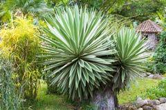 Amerikansk agave för Boquete Escondido dal Fotografering för Bildbyråer