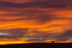 Amerikansk bison silhouetted på soluppgång Royaltyfri Fotografi
